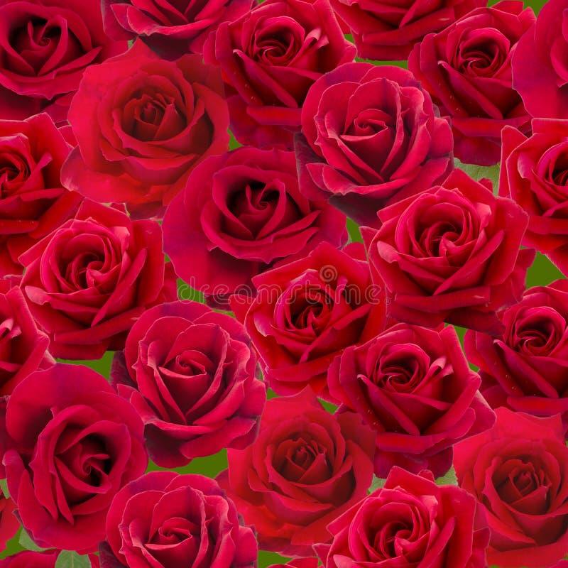 Modelo inconsútil de las rosas rojas imágenes de archivo libres de regalías