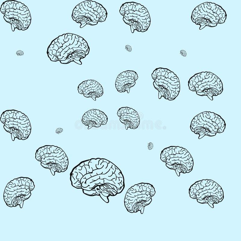 Modelo inconsútil del cerebro libre illustration