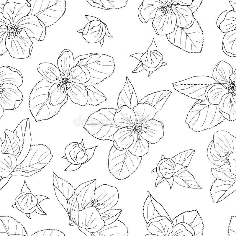 Modelo inconsútil del flor a mano de la manzana, página que colorea ilustración del vector
