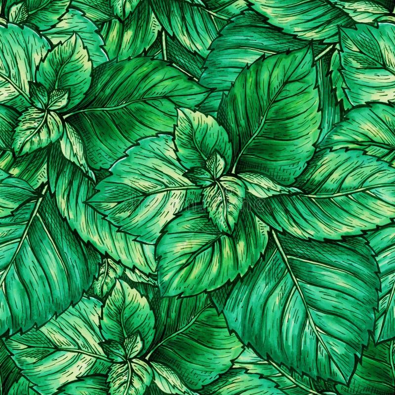 Modelo inconsútil del follaje verde de la menta Té Herb Theme Object Repeating Planta de la botánica de la hierbabuena o de la me foto de archivo libre de regalías