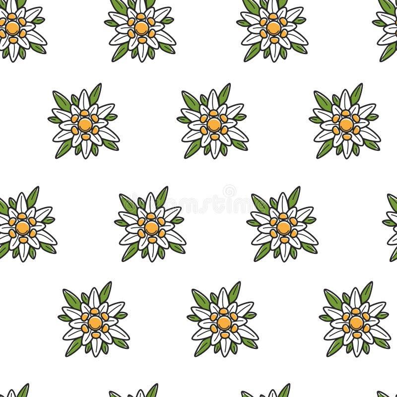 Modelo inconsútil del símbolo austríaco de la flor salvaje de las edelweiss stock de ilustración