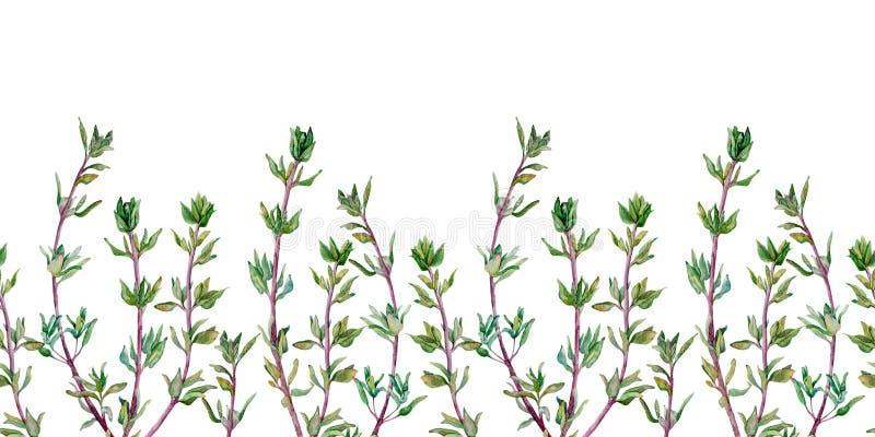 Modelo inconsútil del tomillo Frontera de la acuarela de la especia aislada en el fondo blanco ilustración del vector