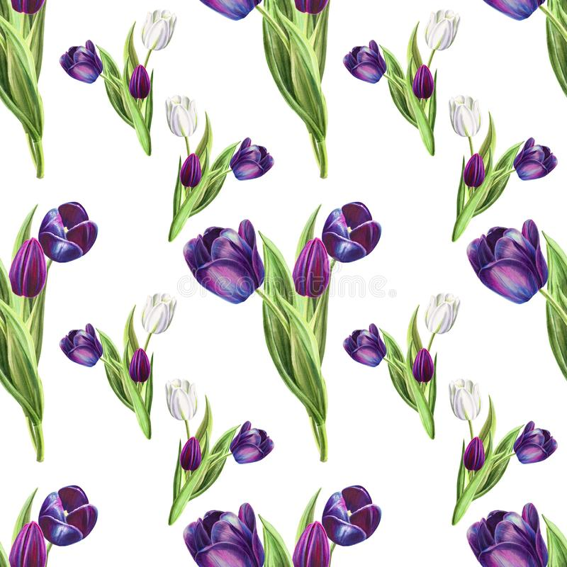 Modelo inconsútil del tulipán blanco y negro hermoso Dibujo del marcador Pintura de la acuarela stock de ilustración