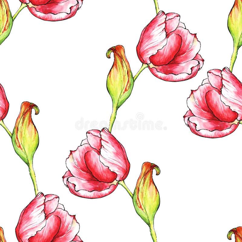 Modelo inconsútil del vector con las flores rojas de los tulipanes stock de ilustración