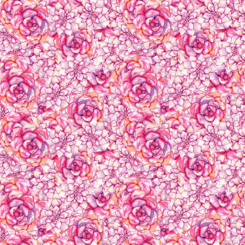 Modelo inconsútil dibujado mano color de rosa rosada de la planta de la flor del succulent del echeveria de la acuarela stock de ilustración
