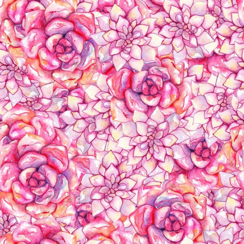 Modelo inconsútil dibujado mano color de rosa rosada de la planta de la flor del succulent del echeveria de la acuarela ilustración del vector