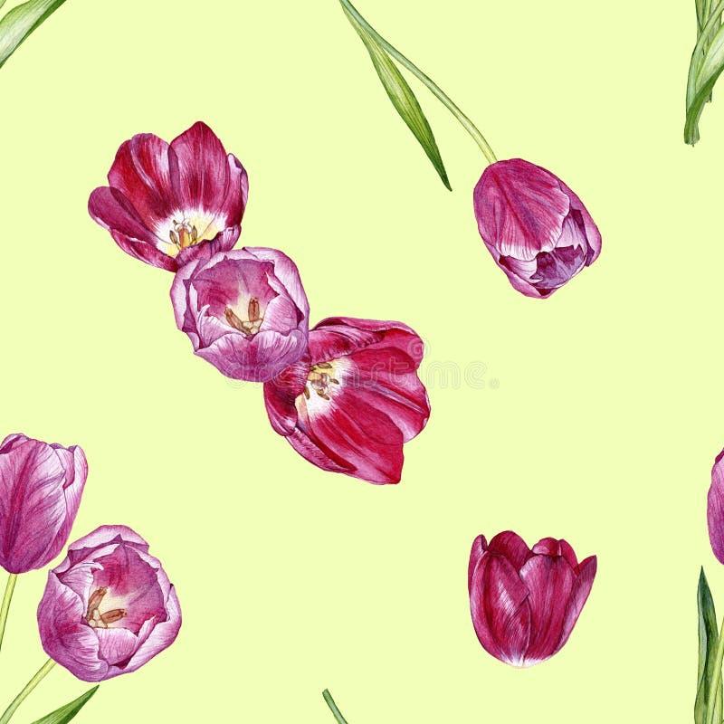Modelo inconsútil dibujado mano de la acuarela con los tulipanes stock de ilustración