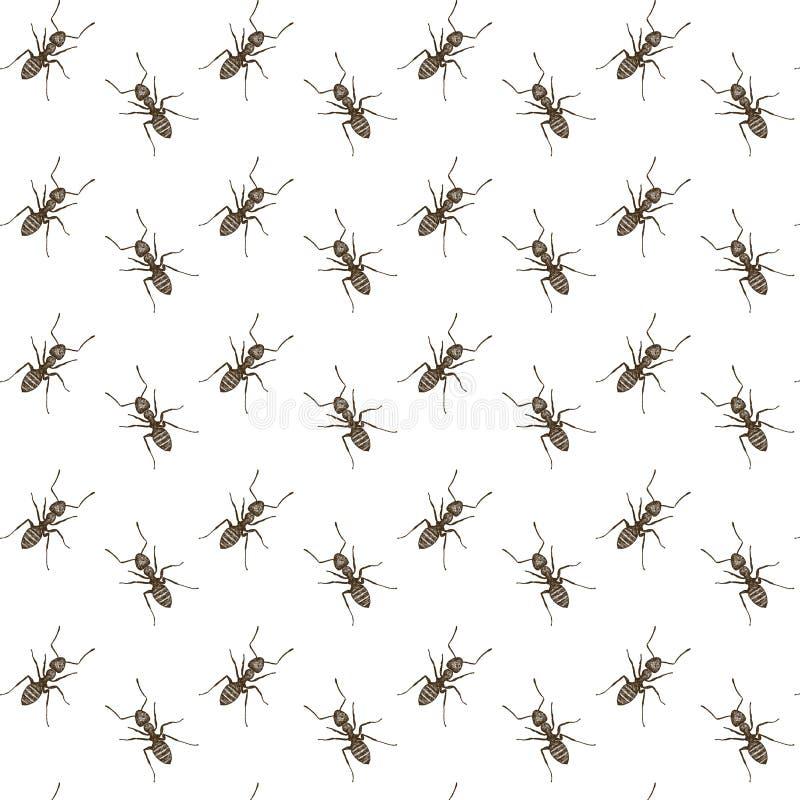 Modelo inconsútil dibujado mano de las hormigas fotos de archivo libres de regalías