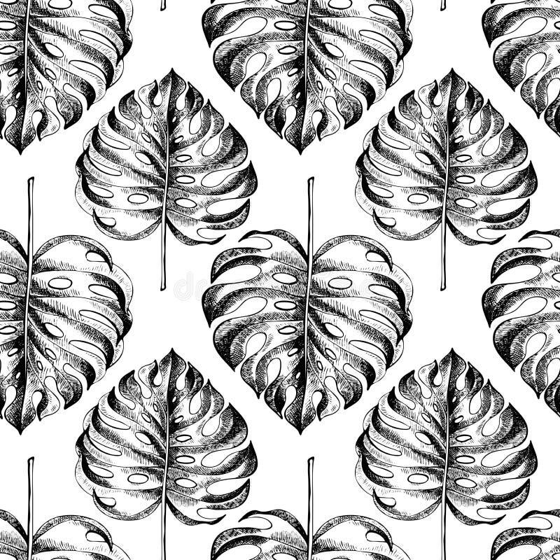 Modelo inconsútil dibujado mano de Vecotr Plantas tropicales Hojas y flores grabadas exóticas Isoalated en blanco Monstera ilustración del vector