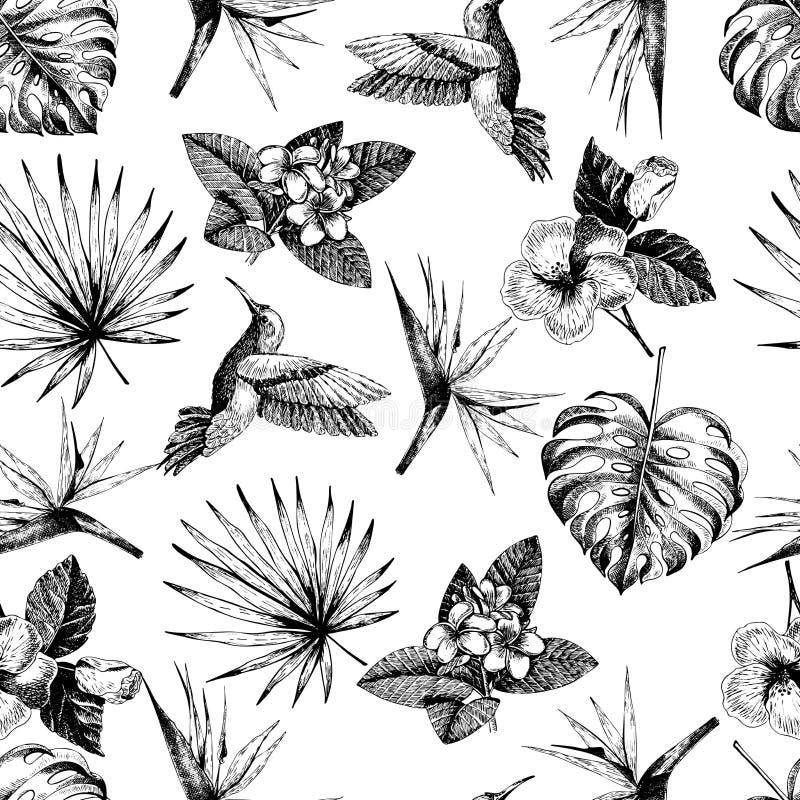 Modelo inconsútil dibujado mano de Vecotr Plantas tropicales Hojas y flores grabadas exóticas Monstera, hojas de palma del livist stock de ilustración