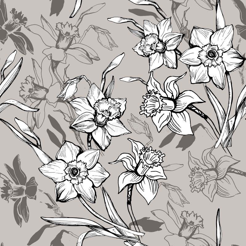 Modelo inconsútil floral monocromático con los narcisos exhaustos de las flores de la mano, narciso libre illustration