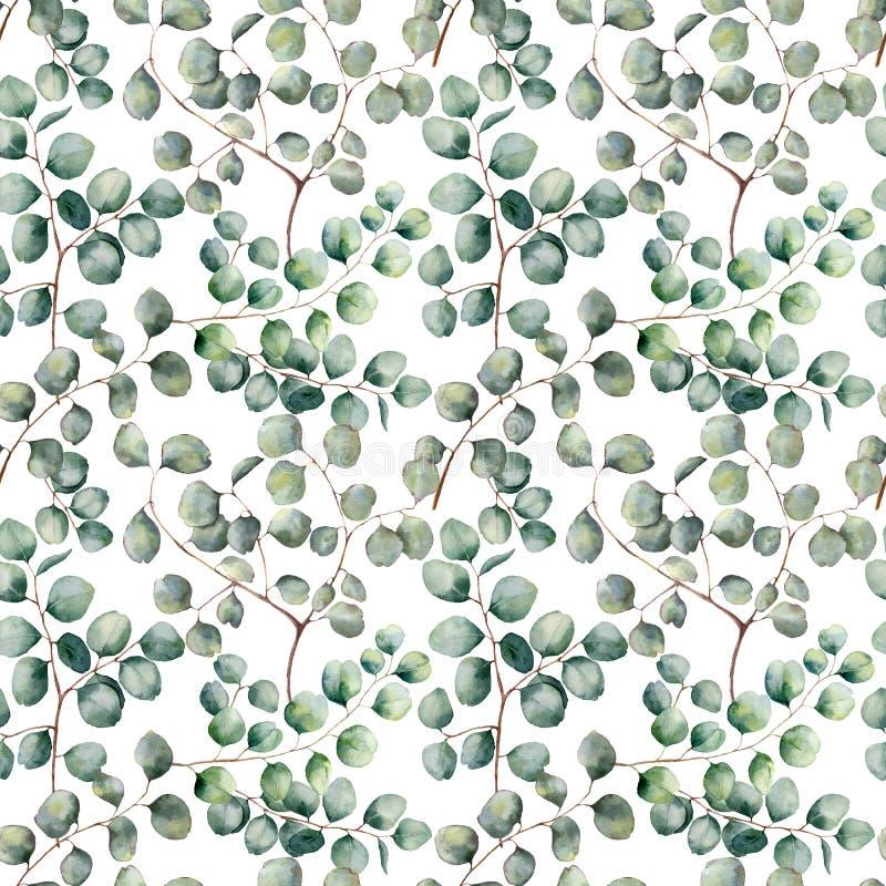 Modelo inconsútil grande del eucalipto del dólar de plata de la acuarela Rama hermosa pintada a mano del eucalipto aislada en bla ilustración del vector