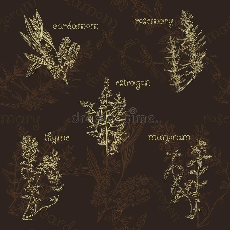 Modelo inconsútil a mano de la colección de las hierbas y de las especias libre illustration