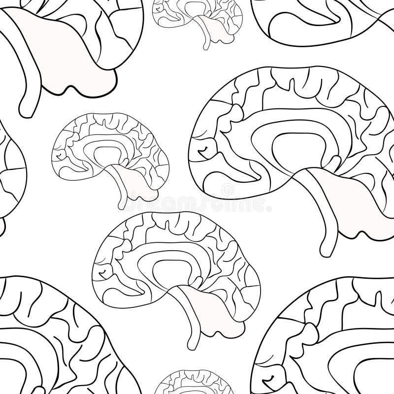 Modelo Inconsútil Que Colorea El Cerebro Humano Ilustración Del ...