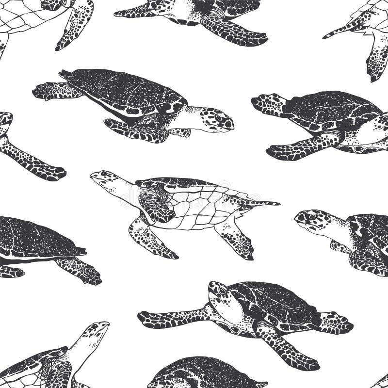 Modelo inconsútil - tortuga del océano Rebecca 36 libre illustration
