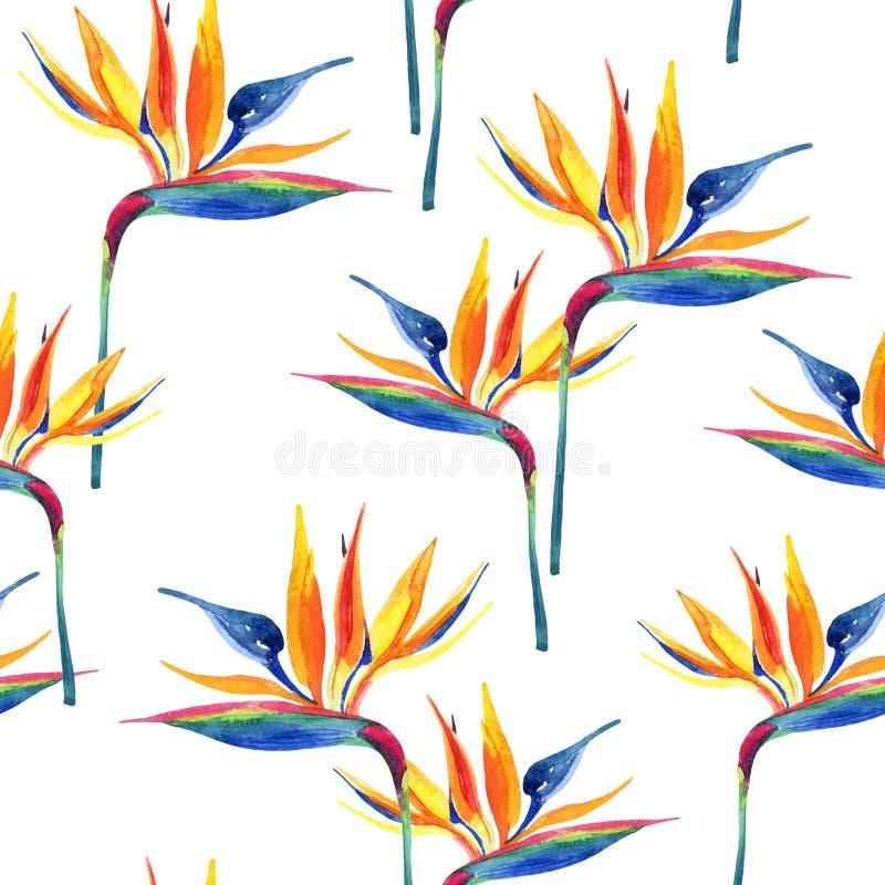 Modelo inconsútil tropical de la acuarela simple con la flor de la ave del paraíso ilustración del vector
