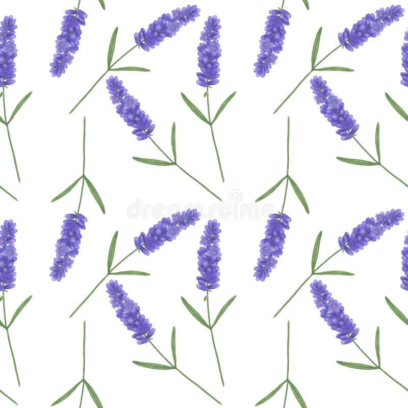 Modelo incons?til con lavanda de la acuarela Ejemplo del texto de papel de Digitaces de las hojas hechas a mano florales de las t stock de ilustración