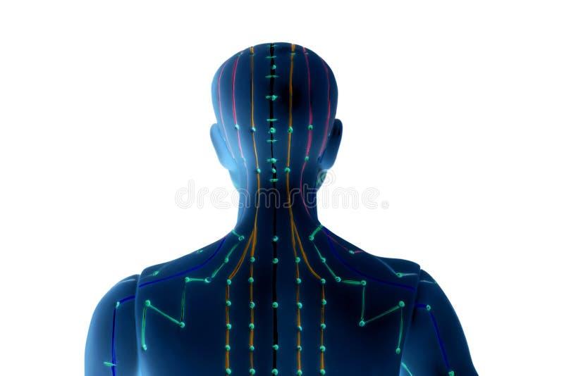 Modelo médico de la acupuntura del ser humano en blanco imágenes de archivo libres de regalías