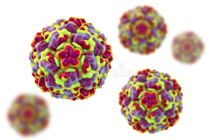 Modelo molecular del rinovirus, el virus que causa frío común y rinitis libre illustration