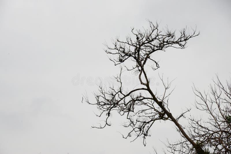 Modelo muerto abstracto blanco y negro de la forma de las ramas de árbol fotografía de archivo libre de regalías