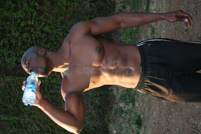 Modelo muscular fotos de stock