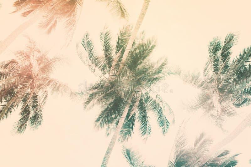Modelo natural con las palmeras de la planta tropical Extracto stock de ilustración