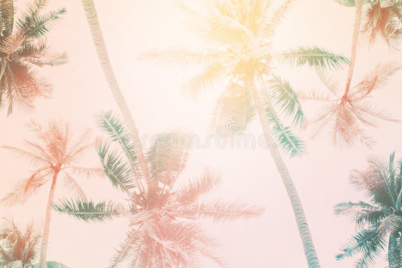 Modelo natural con las palmeras de la planta tropical Extracto ilustración del vector