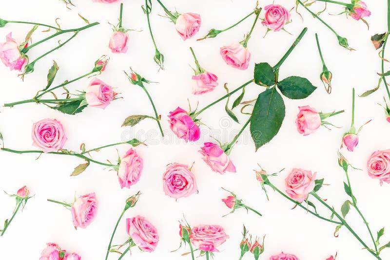 Modelo natural floral con las rosas, las ramas rosadas y las hojas aisladas en el fondo blanco Endecha plana, visión superior libre illustration