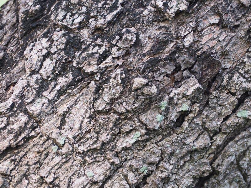 Modelo negro de la corteza notablemente gris fotografía de archivo libre de regalías