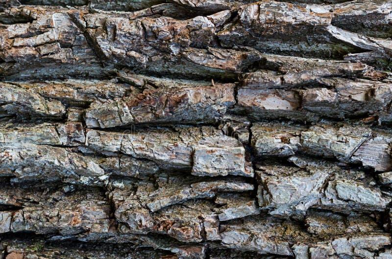 Modelo resistido natural con las cavidades profundas horizontales, textura gris de la corteza de madera foto de archivo libre de regalías