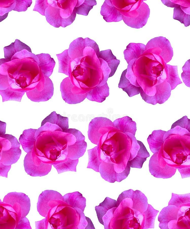 Modelo rosado de Rose Fondo hermoso de la flor inconsútil fotos de archivo