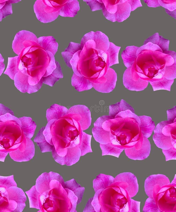 Modelo rosado de Rose Fondo hermoso de la flor inconsútil stock de ilustración