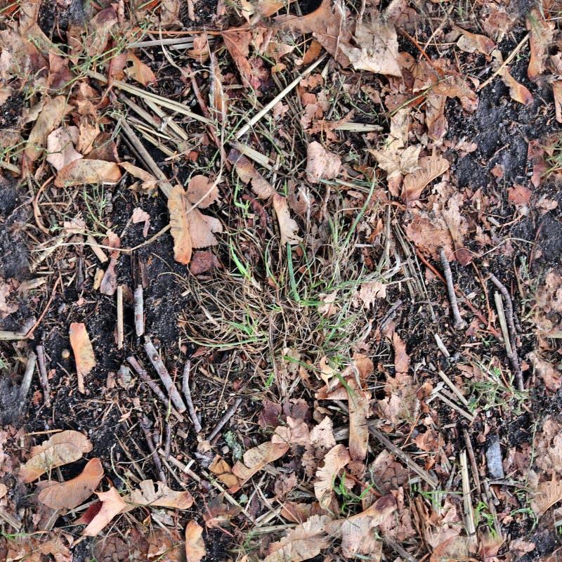 Modelo seemless realista de la textura de la foto de las hojas de otoño en una tierra del bosque imagen de archivo libre de regalías