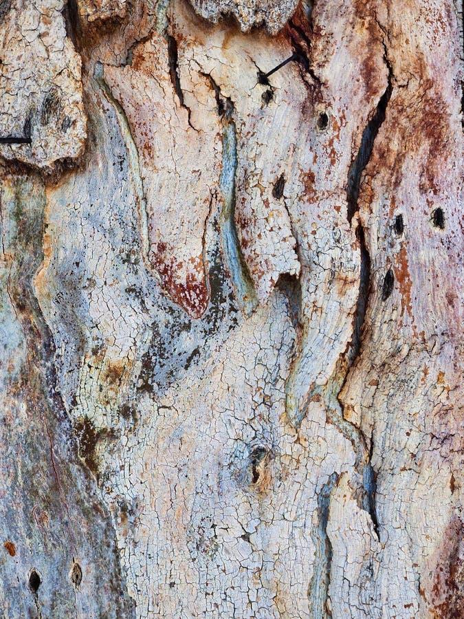 Modelo texturizado abstracto de la corteza de árbol de eucalipto foto de archivo libre de regalías