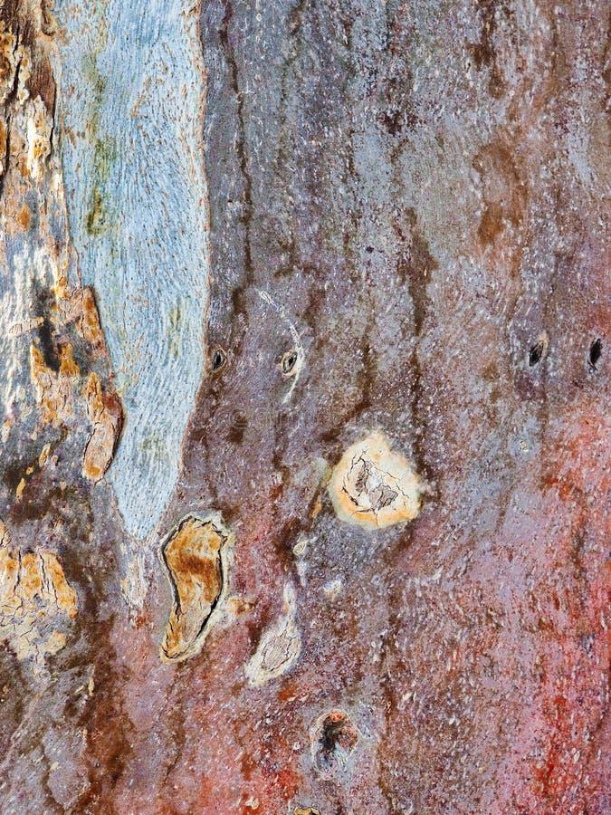 Modelo texturizado abstracto de la corteza de ?rbol de eucalipto imagen de archivo libre de regalías
