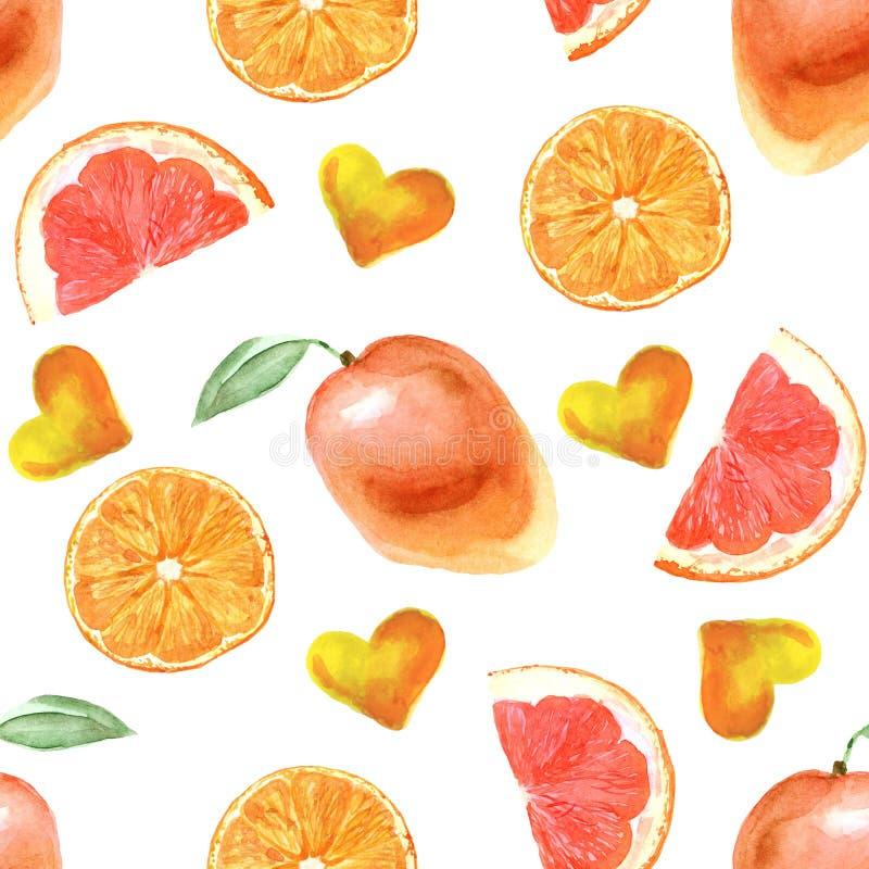 Modelo tropical de la acuarela con la naranja en un fondo blanco ilustración del vector
