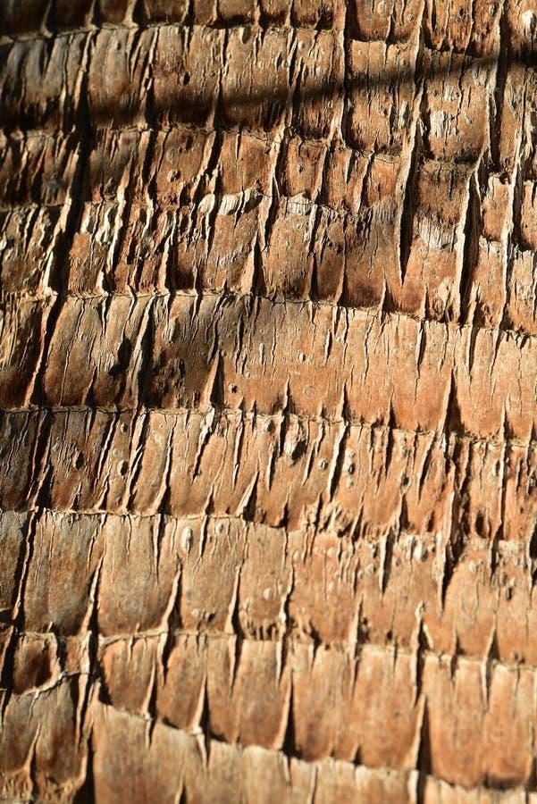 Modelo tropical de la naturaleza del mejor de palmera del tronco fondo de la textura imagen de archivo