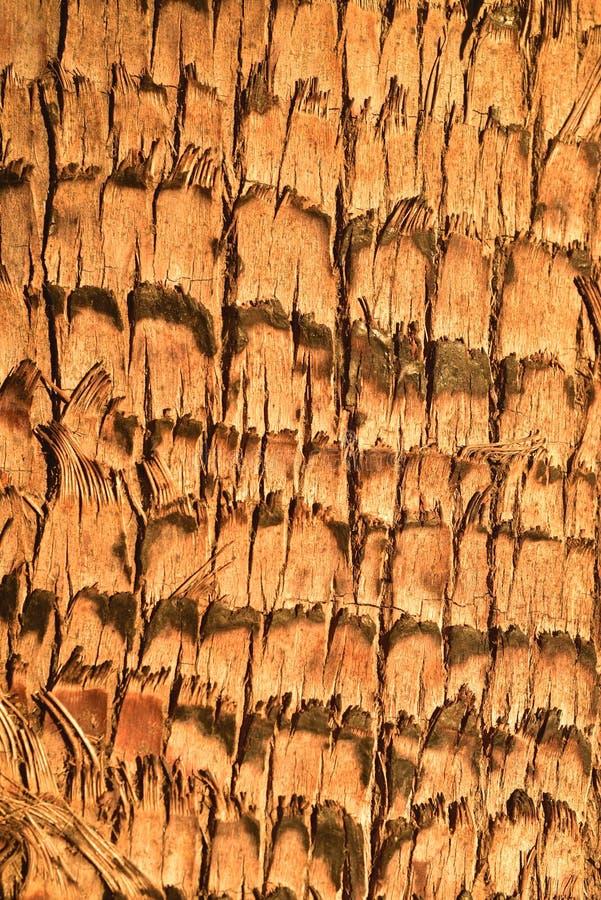 Modelo tropical de la naturaleza del mejor de palmera del tronco fondo de la textura imagen de archivo libre de regalías
