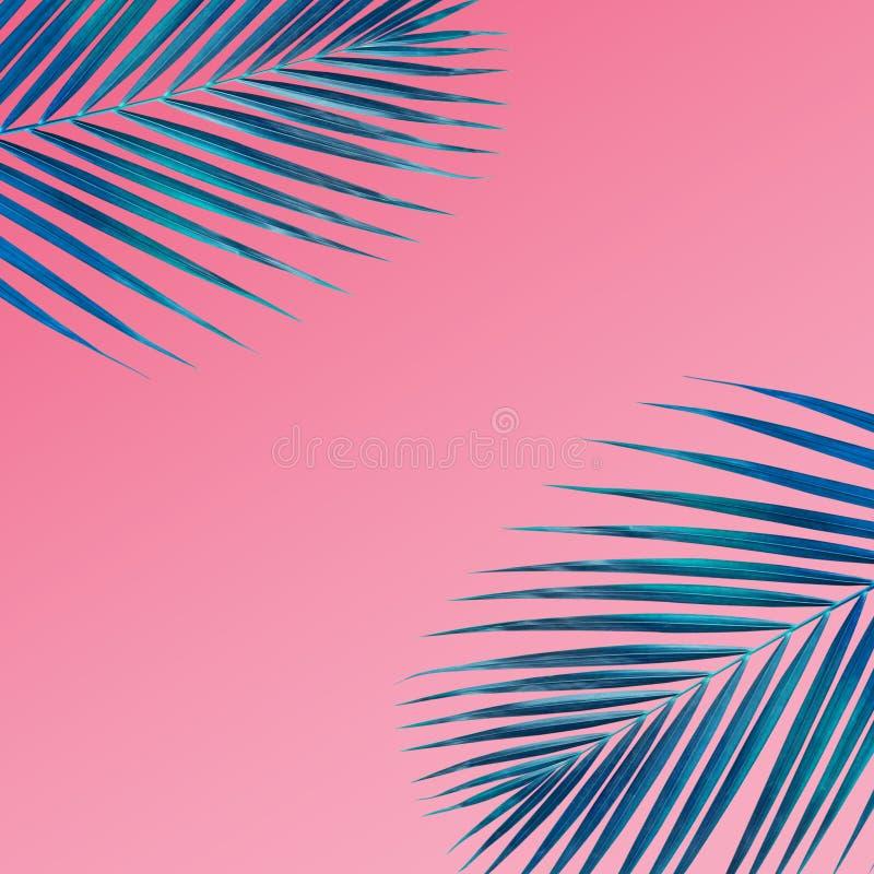 Modelo tropical de las hojas de palma en fondo del color en colores pastel Naturaleza imagen de archivo libre de regalías