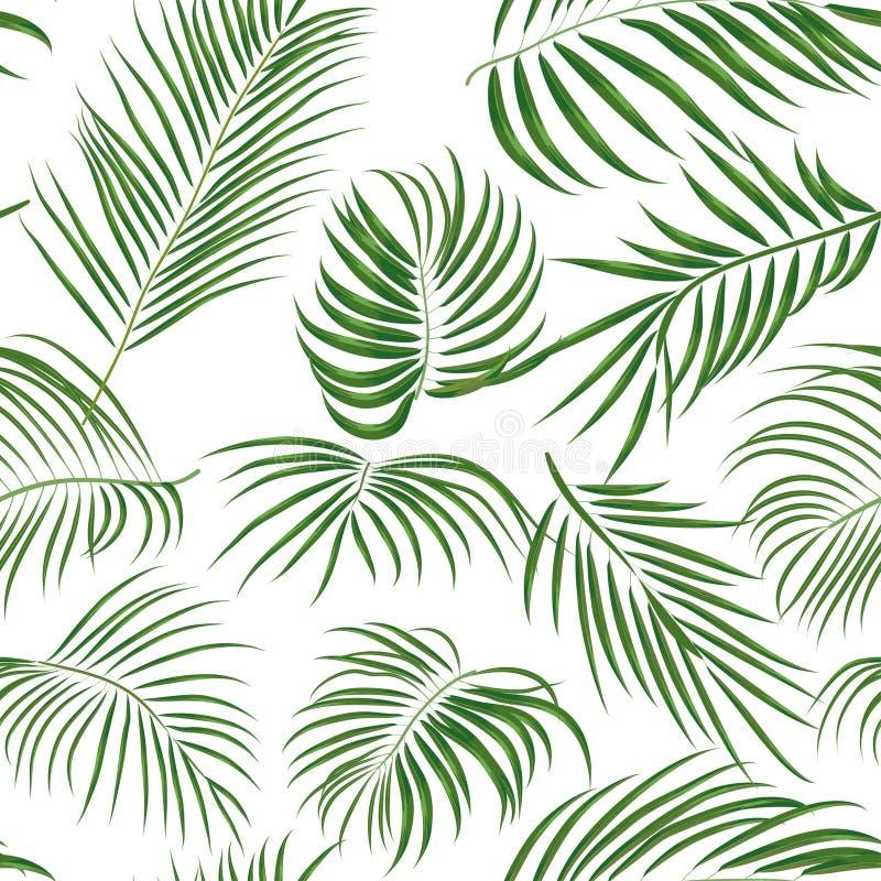 Modelo tropical dibujado mano inconsútil con las hojas de palma, hoja exótica de la selva en el fondo blanco libre illustration