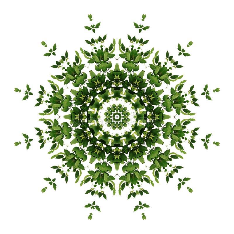 Modelo verde abstracto de la mandala de la flora del fondo, v que sube salvaje foto de archivo libre de regalías