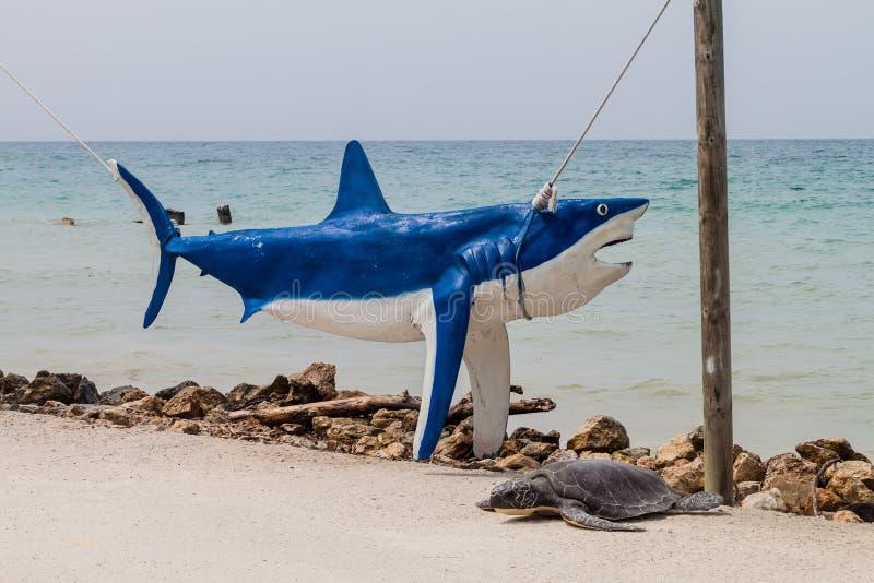 Modelos animais na ilha de Palma do arquipélago de San Bernardo, Colomb imagens de stock royalty free