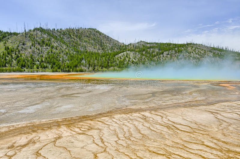 Modelos coloridos en las capas de las algas y de las bacterias del magnífico foto de archivo