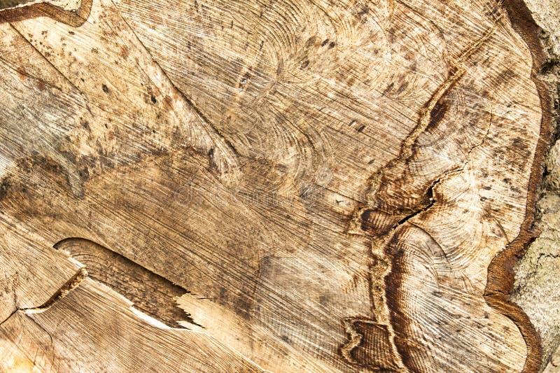 Modelos complejos en un árbol derribado imagen de archivo