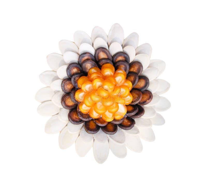 Modelos de flores de la visión superior hechos de la semilla de la sandía, de la calabaza y del maíz en el fondo blanco con la tr imagenes de archivo