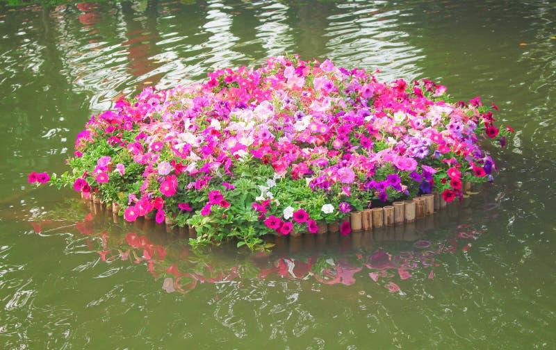 Modelos de flores multicolores coloridos de la petunia con las hojas verdes que florecen en la balsa de bambú en fondo del agua d imagen de archivo
