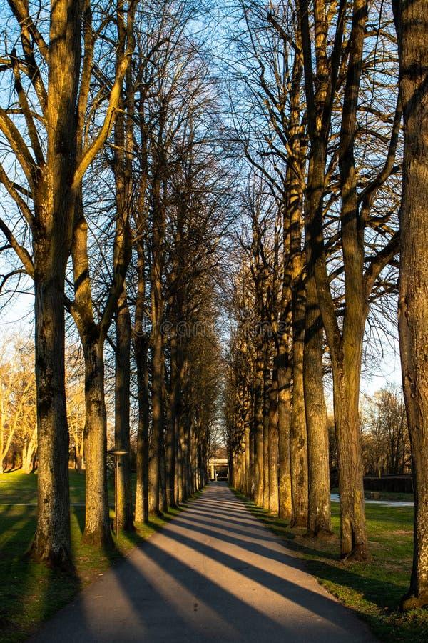 Modelos de sombras y de árboles fotos de archivo