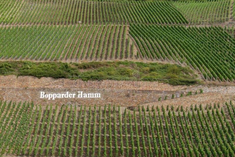 Modelos hermosos creados por los viñedos en cuestas de Bopparder Hamm sobre el valle del Rin, Alemania imagen de archivo