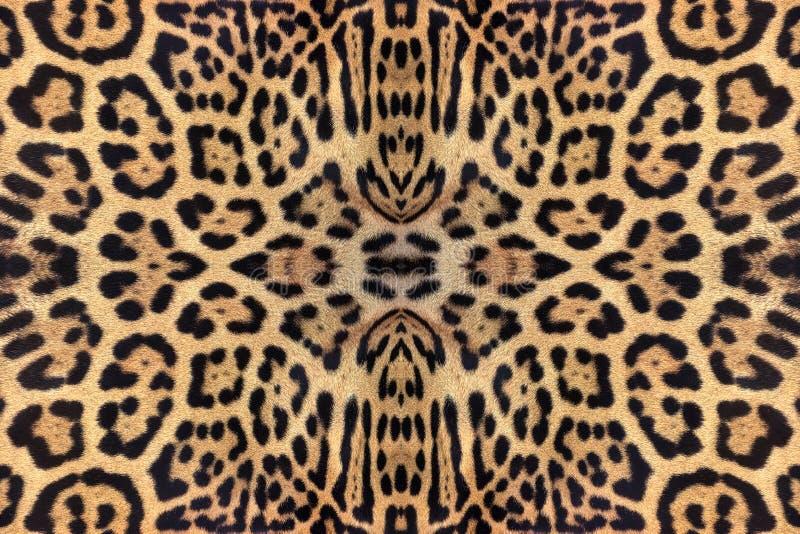modelos y texturas del jaguar imagen de archivo libre de regalías