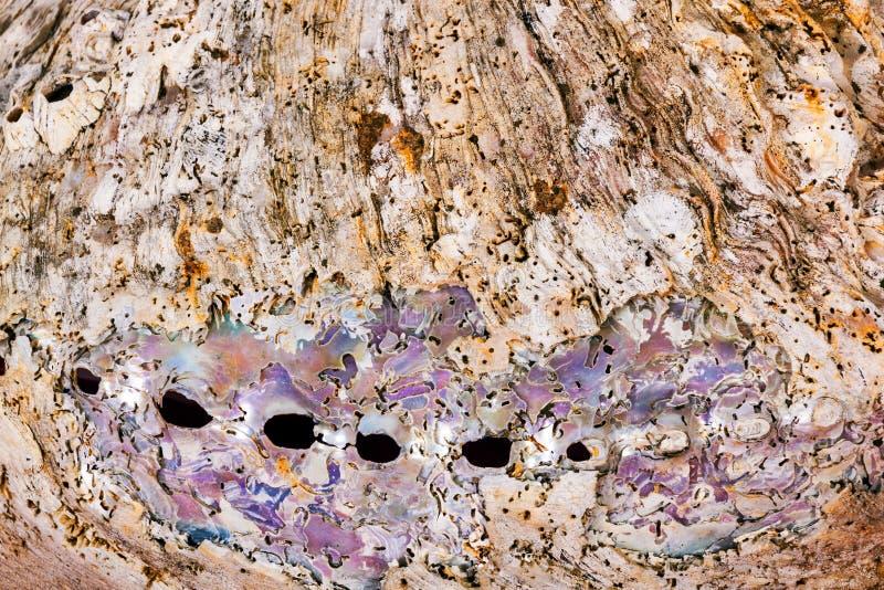 Modelos y texturas en el mar Shell Background fotografía de archivo libre de regalías